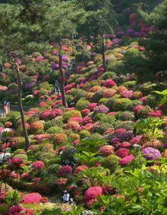 Shiofune Kannon Gardens in Ōme, near Tokyo, Japan (by falchisara).