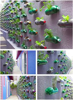 Recycled bottles filled with soil and herbs provide a functional herb garden at a family home in Sao Paulo.