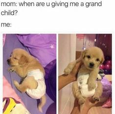 Ideas dogs funny hilarious laughing humor for 2019 Cute Animal Memes, Animal Jokes, Funny Animal Pictures, Cute Funny Animals, Funny Cute, Funny Dogs, Hilarious Pictures, Dog Memes, Funny Memes