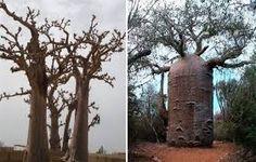 pinterest bordado arvore baoba - Pesquisa Google