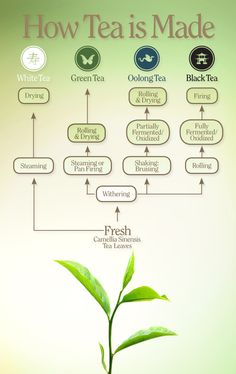How tea is made