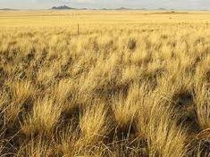 grassland - Google Search