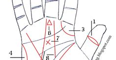 Sign Of Palmists and Astrologers' Hand Palmistry Chinese Face Reading, Indian Palmistry, Talk To The Hand, Palm Reading, Vedic Astrology, Secrets Revealed, Tarot, Knowledge, How To Apply