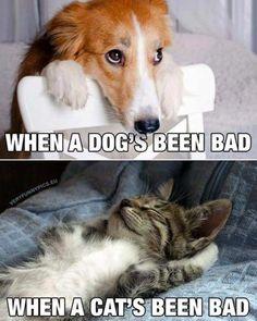 New meme compilation (cat memes,dog memes,pets memes,animal memes) Funny Animal Jokes, Funny Cat Memes, Cute Funny Animals, Cute Baby Animals, Funny Dogs, Hilarious, Clean Animal Memes, Cute Animal Humor, Funny Looking Animals