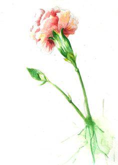 Alina and Antonio watercolor flower carnation
