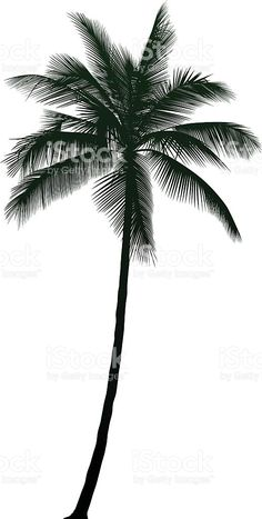 Detailed Palm Tree royalty-free stock vector art