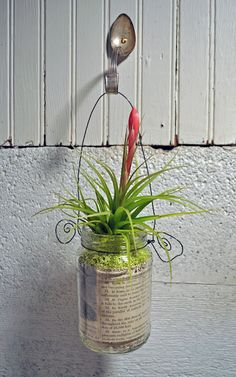 ~  Hanging Air Plants.  ~
