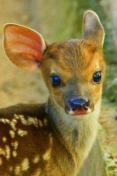 The deer looks like sadie!