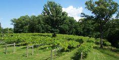Persimmon Ridge Winery in High Ridge, MO- quaint locale, great live music, good sangria