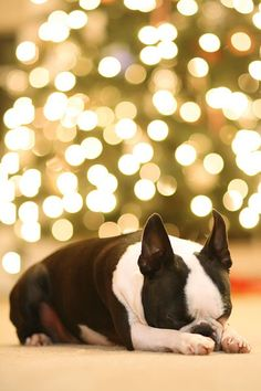 How to take Christmas tree pics with lights in background - Click image to find more Photography Pinterest pins