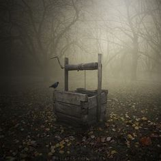 abandoned well - reminds me of a scene from a horror movie.....what climbs out?  Eeeek!!
