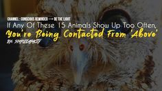 If Any Of These 15 Animals Show Up Too Often, You're Being Contacted From 'Above' - YouTube