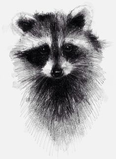 Raccoon, One of my sketch a day drawings #raccoon #sketch #drawing prints