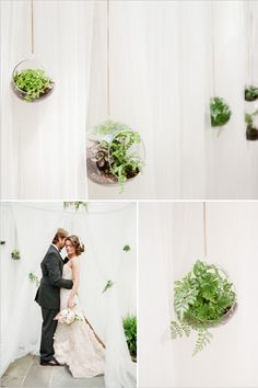 hanging succulent ceremony backdrop