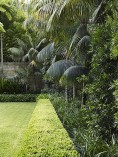 Buxus hedge with mixed planting - formal and tropical garden plants -