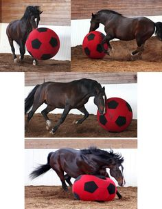"""Natural Horse Talk - Home of If Your Horse Could Talk"""" Web"""
