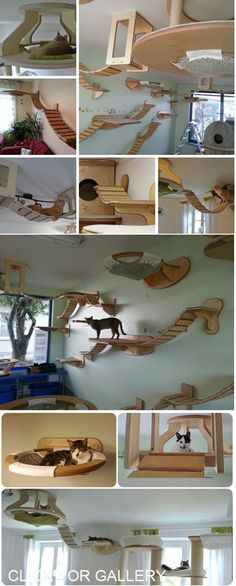 How ambitious am I feeling today?!? I think this would be perfect above the couches. #catsdiyenclosure