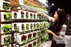 綠植栽專區首次引進台灣,可綠化居家空間。(鄧博仁攝)