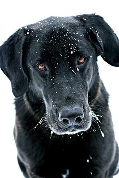 Best Eyes Finalist - Chelsea's dog Harley from Westmore, Vermont.