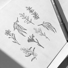 ☘️Natives flash sheet All Sold✨ Tiny Flower Tattoos, Simple Flower Tattoo, Dainty Tattoos, Small Tattoos, Wildflower Drawing, Wildflower Tattoo, Flower Line Drawings, Flower Sketches, Line Art Tattoos