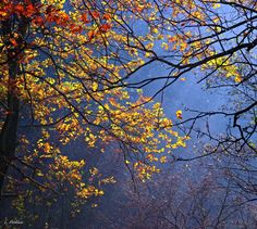 Colors of autumn - South Moravia