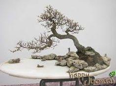 Resultado de imagen para chinese bonsai