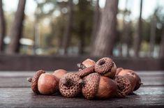 Eichel-Amulett In diesem Artikel möchte ich euch zeigen, wie man eine Eichel mit Kräutern füllt und so ein Amulett erhält. Ich selber trage auch so ein Amulett, das mir jeglichen Schadzauber im wahrsten Sinne des Wortes vom Hals hält ;). Ich sammel diese Eicheln der Sumpf-Eiche oder der Roteiche, weil die Früchte sehr hart sind und […]