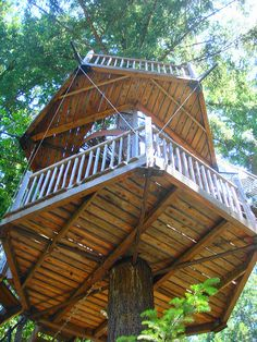 a view of the treehouse when we looked up. (the stairway would be to our left)