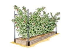 RaisedBeds.com - Raspberry Garden Raised Bed Kit, $189.95 (http://raisedbeds.com/raspberry-garden-raised-bed-kit/)