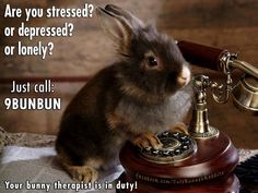 Bunny Therapist https://www.facebook.com/CuteBunnehRabbits/photos/a.1740894526149108.1073741828.1737384509833443/1869322903306269/?type=3&theater #Therapy