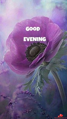Images-Good-Evening-Nice-Pictures-139 Good Evening Messages, Good Evening Greetings, Good Evening Wishes, Good Night I Love You, Good Night Friends, Good Night Quotes, Good Morning Sunday Images, Good Morning Good Night, Morning Wish