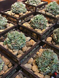 Gabion planters.