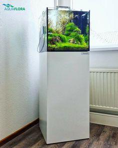#Throwback 2016 Nano planted aquarium scaped by Filipe Oliveira in Aquaflora's office.   #Aquaflora #Aquascaping #planted #aquarium #aquatic #plant #freshwater #plantedtank #aquascape #plantedaquarium #FAAO