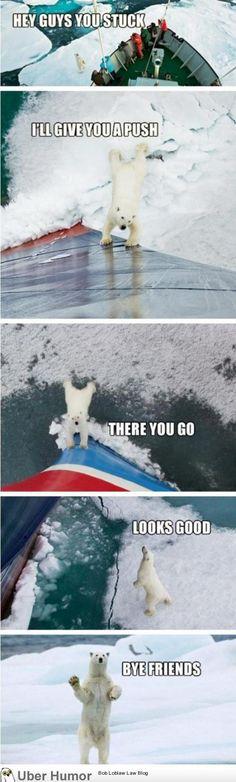 Friendly polar bear :)
