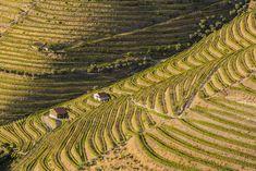 Viñedos en los alrededores de Pinhão, en el valle del Alto Duero, declarados patrimonio mundial, en Portugal. Visit Portugal, Portugal Travel, Ria Formosa, Budapest, Beautiful Places, Landscape, Ideas Para, News, Articles