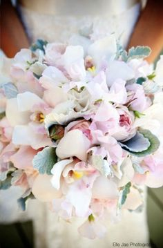 The bridal bouquet will be a clutch bouquet of white peonies, ivory garden roses, silver brunia, gray dusty miller, blush phalaenopsis orchids (purple-pink centers), and blush spray roses wrapped in ivory ribbon with the stems showing.