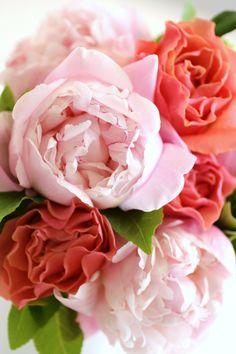 peonies pink an coral