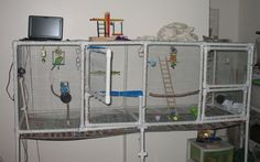 Finished my aviary/giant flight cage last week - Talk Budgies Forums