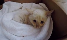 Family Saves Frozen Kitten Found in Snow and Brings Him Back to Life