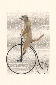 Meerkat on Penny Farthing Bike Original Illustration by FabFunky, $12.00