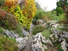 Rock Garden Muckross, Ireland Reminds me of the rocks in Carlton that I played on as a kid.