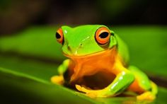 cute frog 05 hd picture
