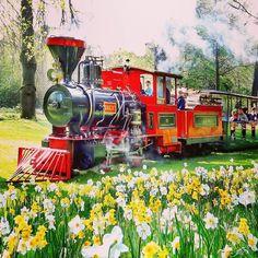 """Seit gestern fährt die Dampflok """"Greif""""  wieder durch den #Schlossgarten. Habt ihr das gute #Wetter heute schon mal für eine Rundfahrt genutzt? #karlsruhe #visitbawu #visitkarlsruhe #lokomotiv #travel #travelblog #flowers #train #placetobw #bwjetzt #instalike #picture #bestoftheday #joingermantradition #weekend #sunshine #amazing #happy #spring #easter"""