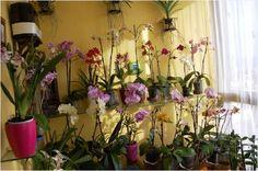 Cuidar las Orquídeas en casa compartido por #cosmeticoslibni productos #cosmeticos y de #limpieza