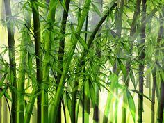 Bambu | Plantas Ornamentais