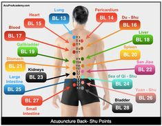 The Back-Shu Points in acupuncture are all located in the back of the body and are where Qi gathers. They are used to treat each organ's… Cupping Therapy, Massage Therapy, Craniosacral Therapy, Cupping Points, Acupressure Points Chart, Body Pressure Points, Meridian Acupuncture, Yin Yang, Acupressure Treatment