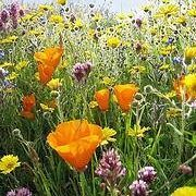 How to Plant Wildflower Seeds | eHow
