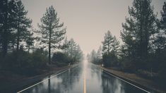 This photo is about: Forest, landscape, haze . Beautiful collection of free stock photos from «The Big Photos