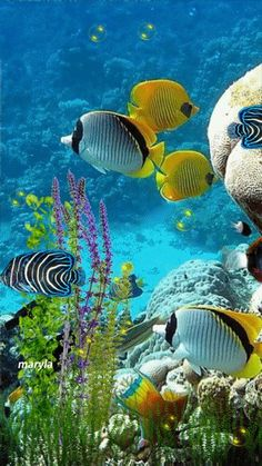 Peixes e Criaturas Marinhas, Under The Water, Life Under The Sea, Under The Ocean, Sea And Ocean, Fish Ocean, Underwater Creatures, Underwater Life, Ocean Creatures, Colorful Fish