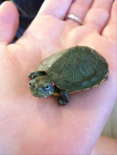 Bored Panda compiles photos of animals at their angriest Small Turtles, Baby Sea Turtles, Cute Turtles, Pet Turtle, Tiny Turtle, Turtle Love, Angry Animals, Cute Baby Animals, Funny Animals